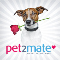 Avatar for PET2MATE - All about your pet