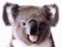 Avatar for KoalaShirt