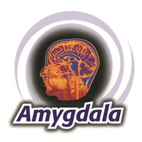 Amygdala Recruitment Solutions