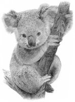 Avatar for Koalafy Assessments