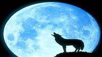 Avatar for Moonslighting