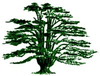 Avatar for Cedar Ridge Ventures