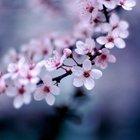 Blossom Woo